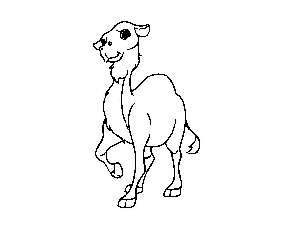 A dromedary coloring page