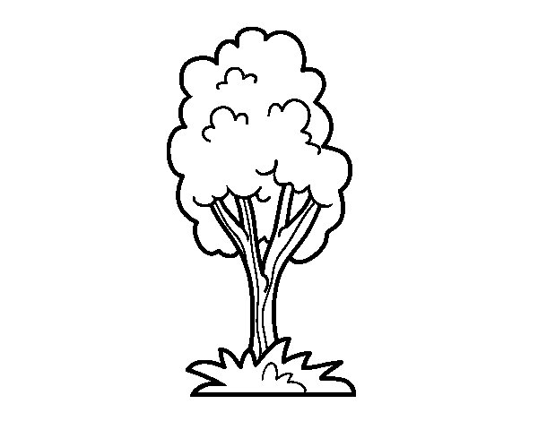 A park tree coloring page