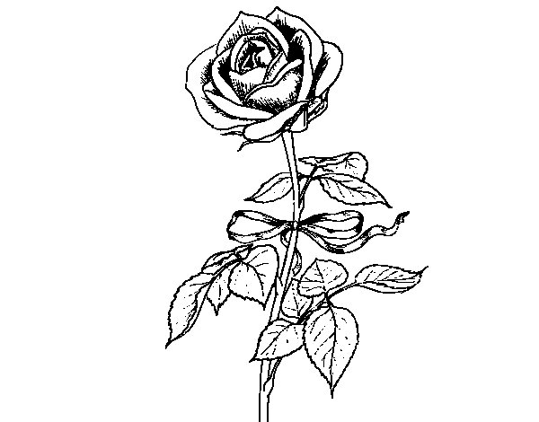 A rose coloring page