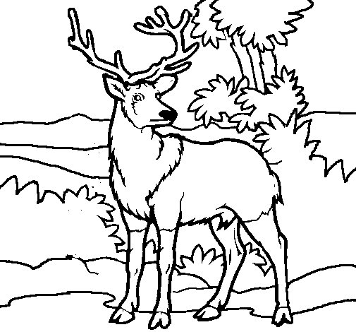 Adult deer coloring page