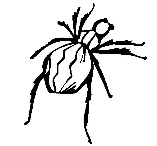 black widow spider coloring page - Black Widow Spider Coloring Pages