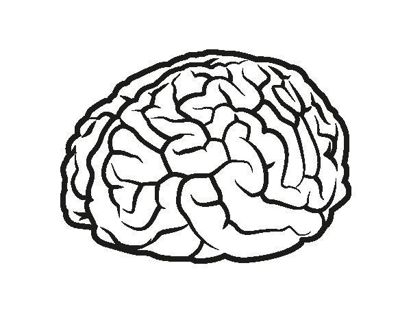 Brain coloring page - Coloringcrew.com
