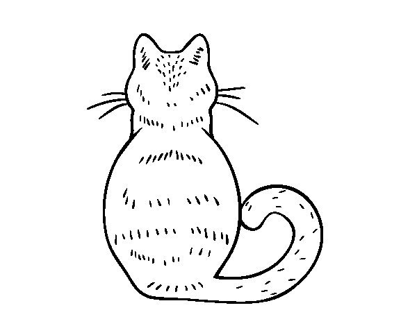 Cat back coloring page