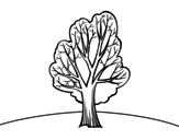 Chestnut coloring page