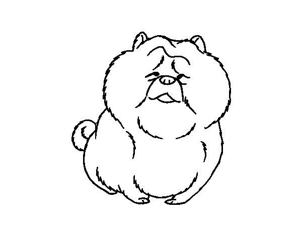Chow Chow Coloring Book
