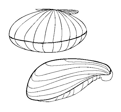 Clams coloring page