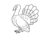 Common turkey coloring page