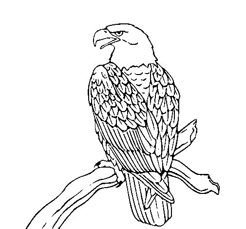 Eagle on branch coloring page