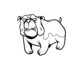 English Bulldog dog coloring page
