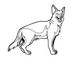 German Shepherd coloring page