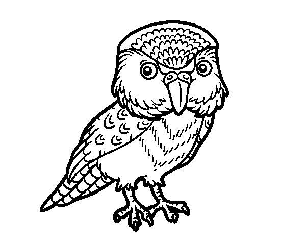 Kakapo coloring page