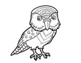 Dibujo de Kakapo
