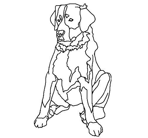 Labrador coloring page