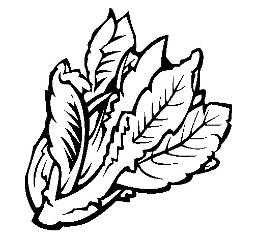 Lettuce II coloring page