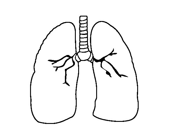 lungs coloring pages | Lung coloring page - Coloringcrew.com