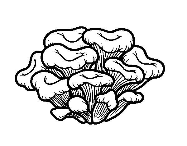 Maitake mushroom coloring page