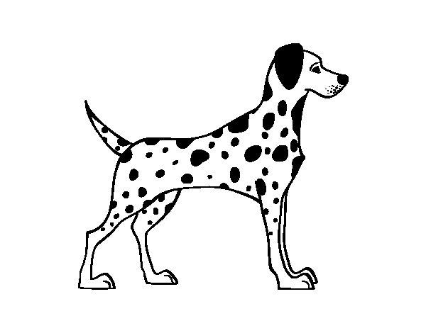 Male dalmatian coloring page