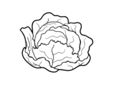 Organic cabbage coloring page