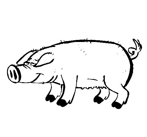Pig with black trotters coloring page
