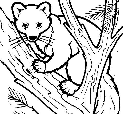 Pine marten in tree coloring page