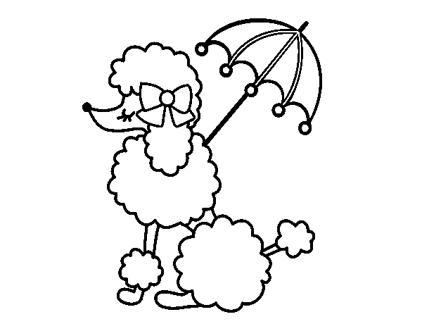 Poodle with sunshade coloring page Coloringcrewcom