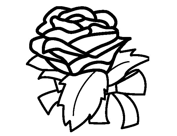 Rose, flower coloring page