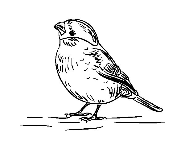 Serin coloring page
