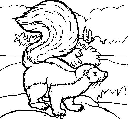 Delicieux Skunk Coloring Page