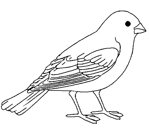 coloring pages sparrow - photo#19
