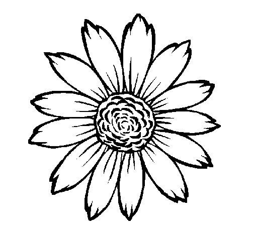 Sunflower coloring page  Coloringcrewcom
