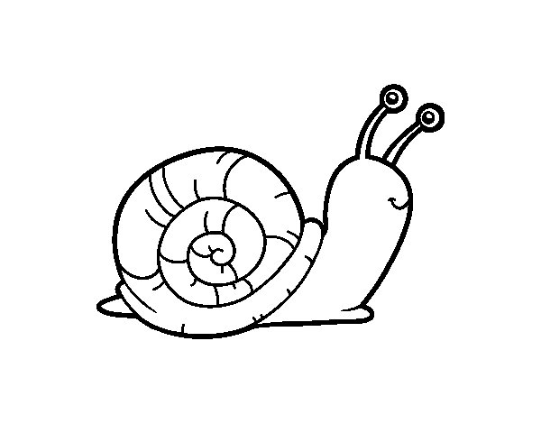 The snail coloring page