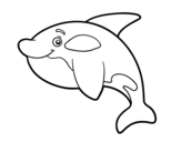 Young killer whale coloring page