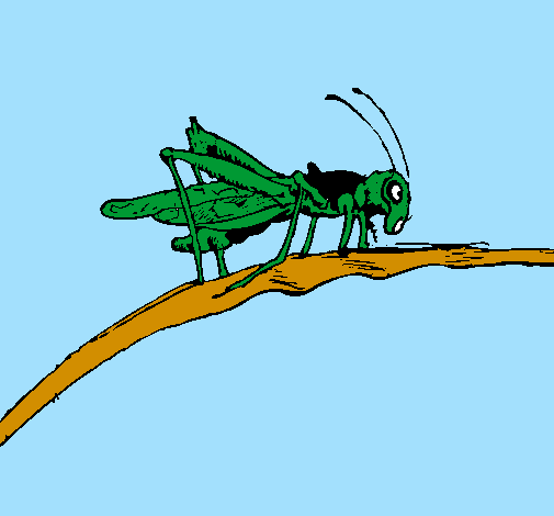 Grasshoppers coloring page