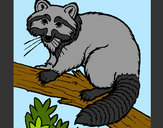 Coloring page Raccoon painted byBigricxi