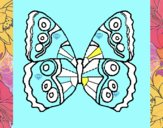 Butterfly 1a