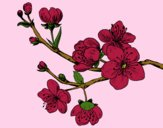 Coloring page Cherry-tree branch painted bylorna
