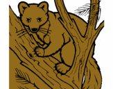 Pine marten in tree
