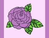 Coloring page Rose painted byAnia