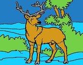 Adult deer