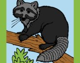 Coloring page Raccoon painted bylorna