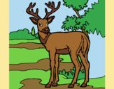 Coloring page Young deer painted bylorna