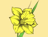 Coloring page Narcissus flower painted byLornaAnia