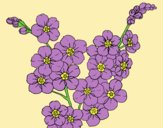 Coloring page Cherry tree flower painted byLornaAnia
