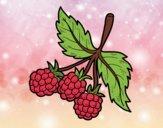 Branch of raspberries