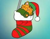 Kitten sleeping in a Christmas stocking