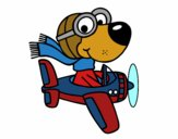 Aviator dog