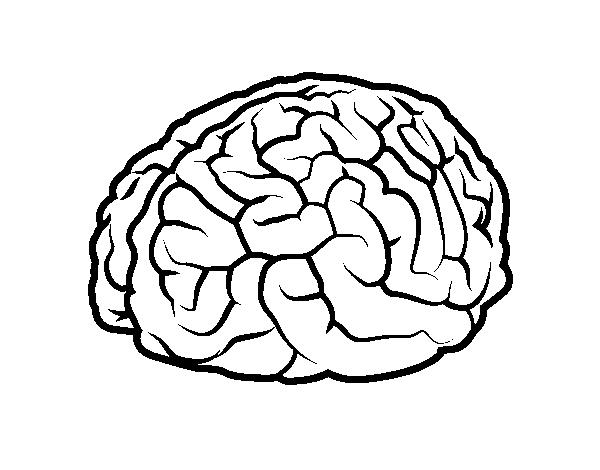 Brain Coloring Page Coloringcrew Com