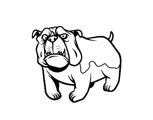 English Bulldog Dog Coloring Page