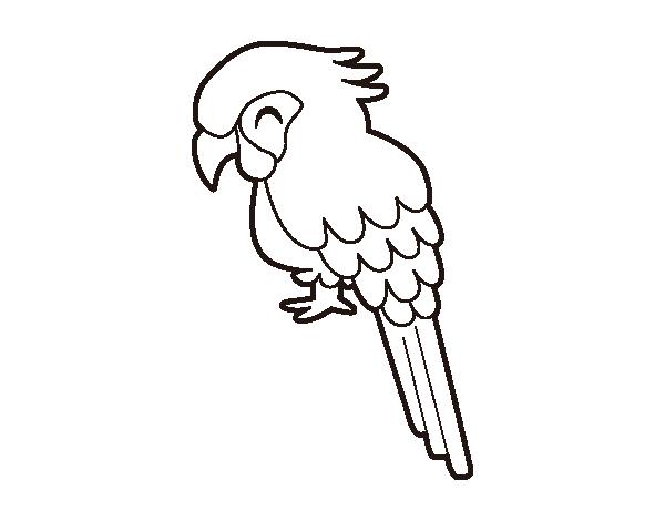 Macaw coloring page - Coloringcrew.com