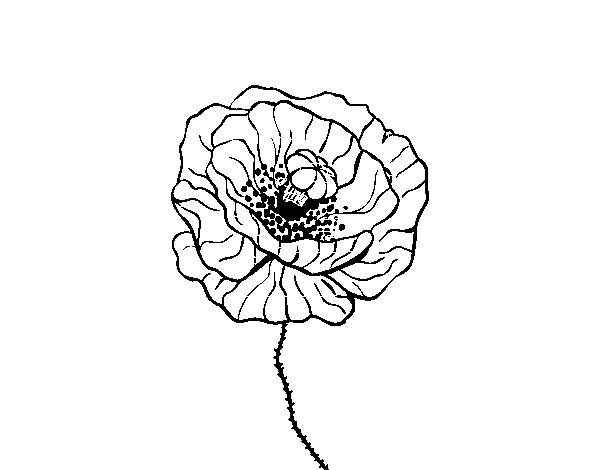 Poppy Flower Coloring Page Coloringcrew Com